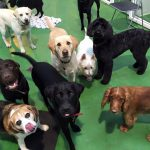 Dog day care group image