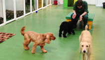 dog-creche-home