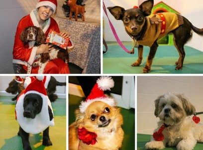 Doggy Christmas Party 2015 No2