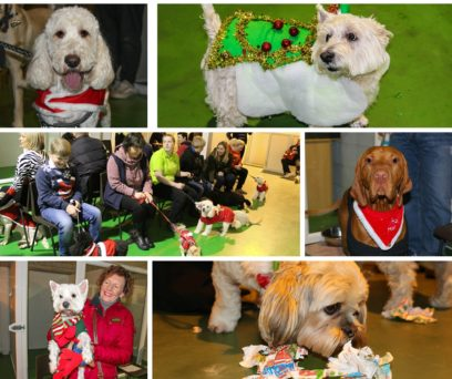 Doggy Christmas Party 2015