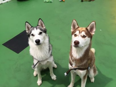 Spike & Saffy love to come to creche