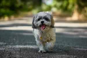 happy dog walking along a street