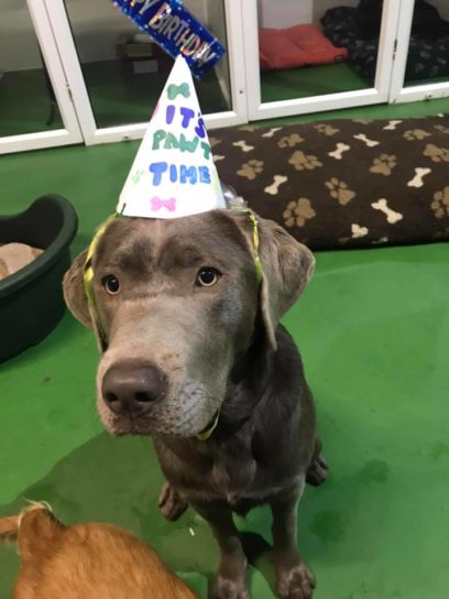 Party time at Doggy Days