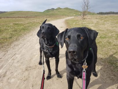 Adventure Walks at Doggy Days
