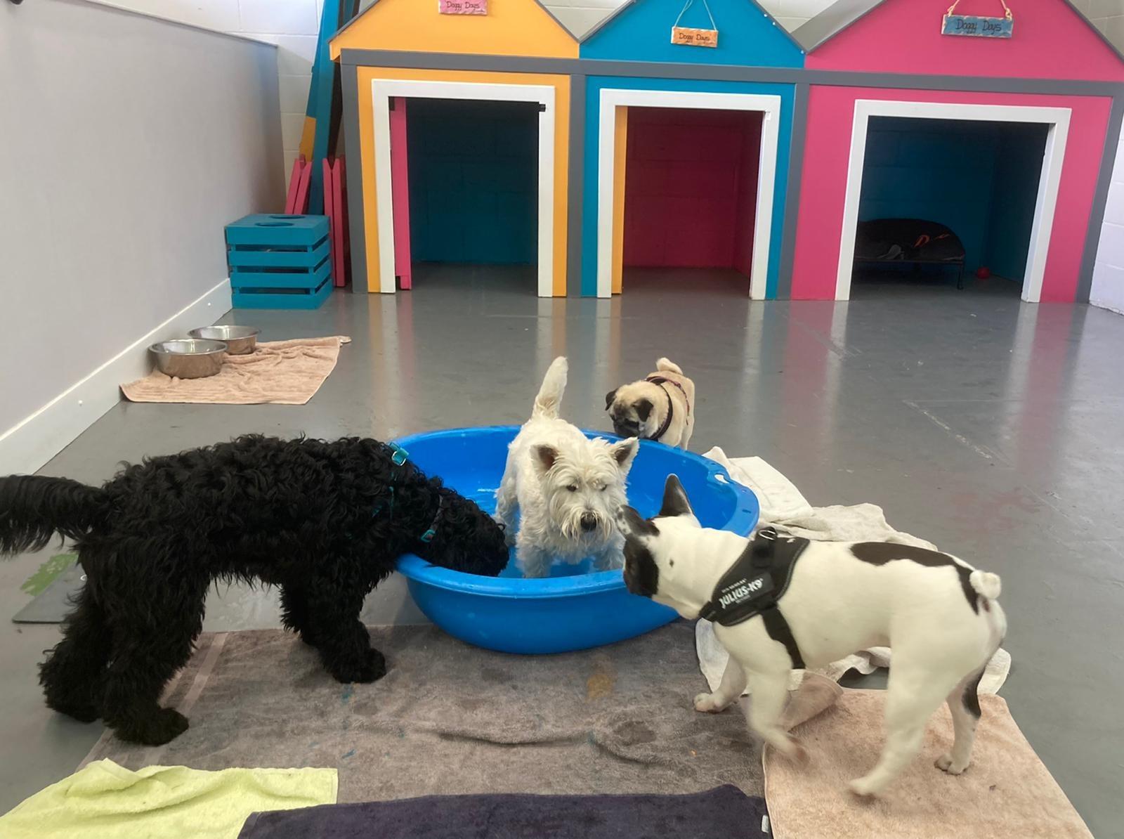 Doggy Days Grooming Salon